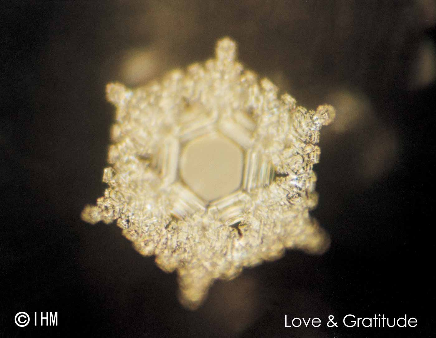 Emoto's water crystals photo of the words 'love and gratitude'